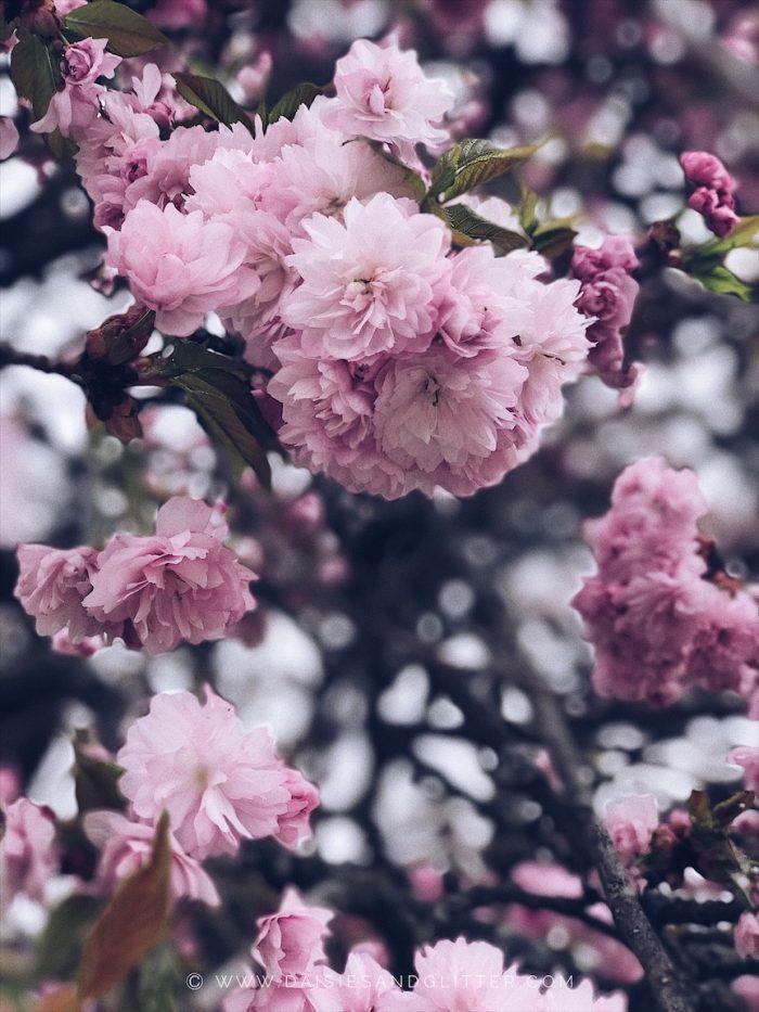 daisiesandglitter, springtime, Freebie