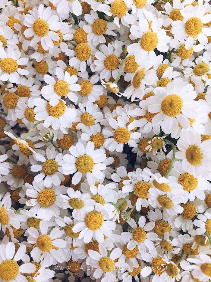 Wallpaper daisiesandglitter