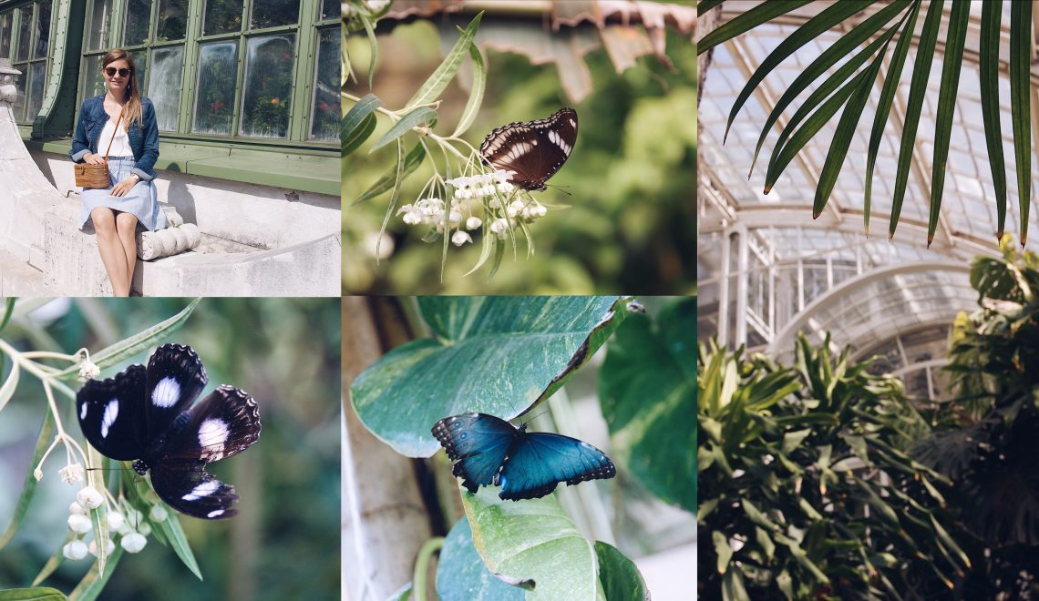 Schmetterlingshaus in Wien