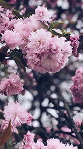 Wallpaper_daisiesandglitter_spring_2018 (11)_169x300
