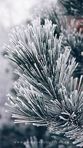 Wallpaper_daisiesandglitter_winter_2018 (1)_169x300
