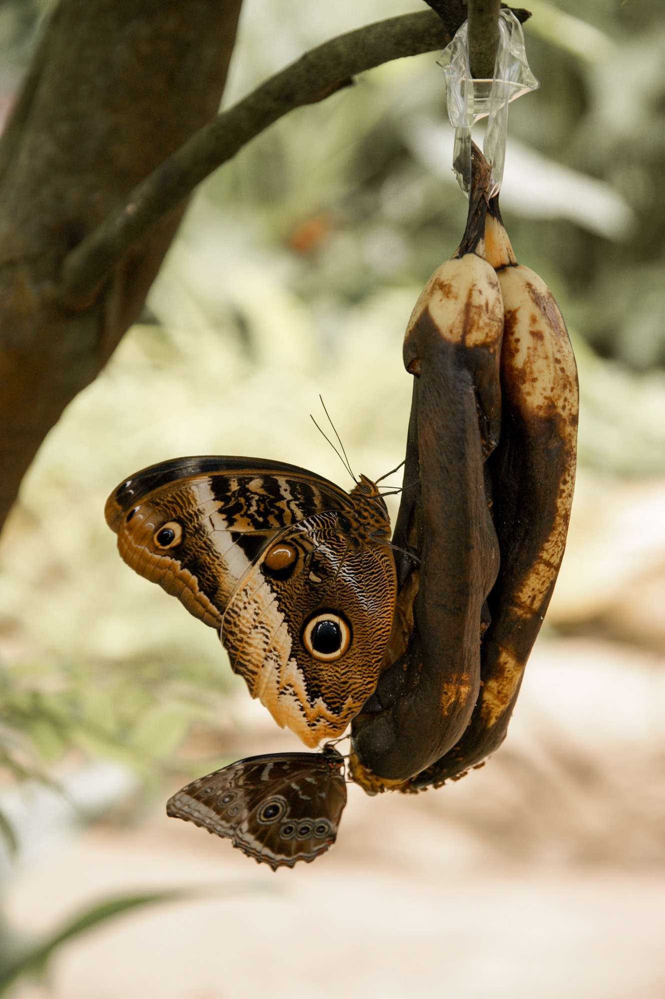Butterfly Park Schmetterlingshaus Benalmadena