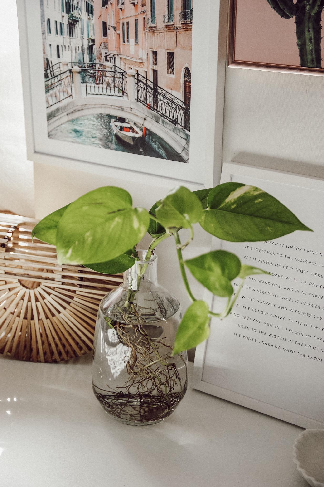 Pflanzen im Wasser