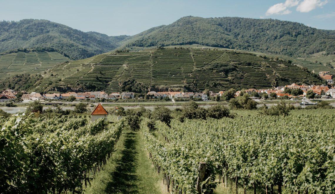 Wachau – Spitz an der Donau: Wanderung zum Tausendeimerberg