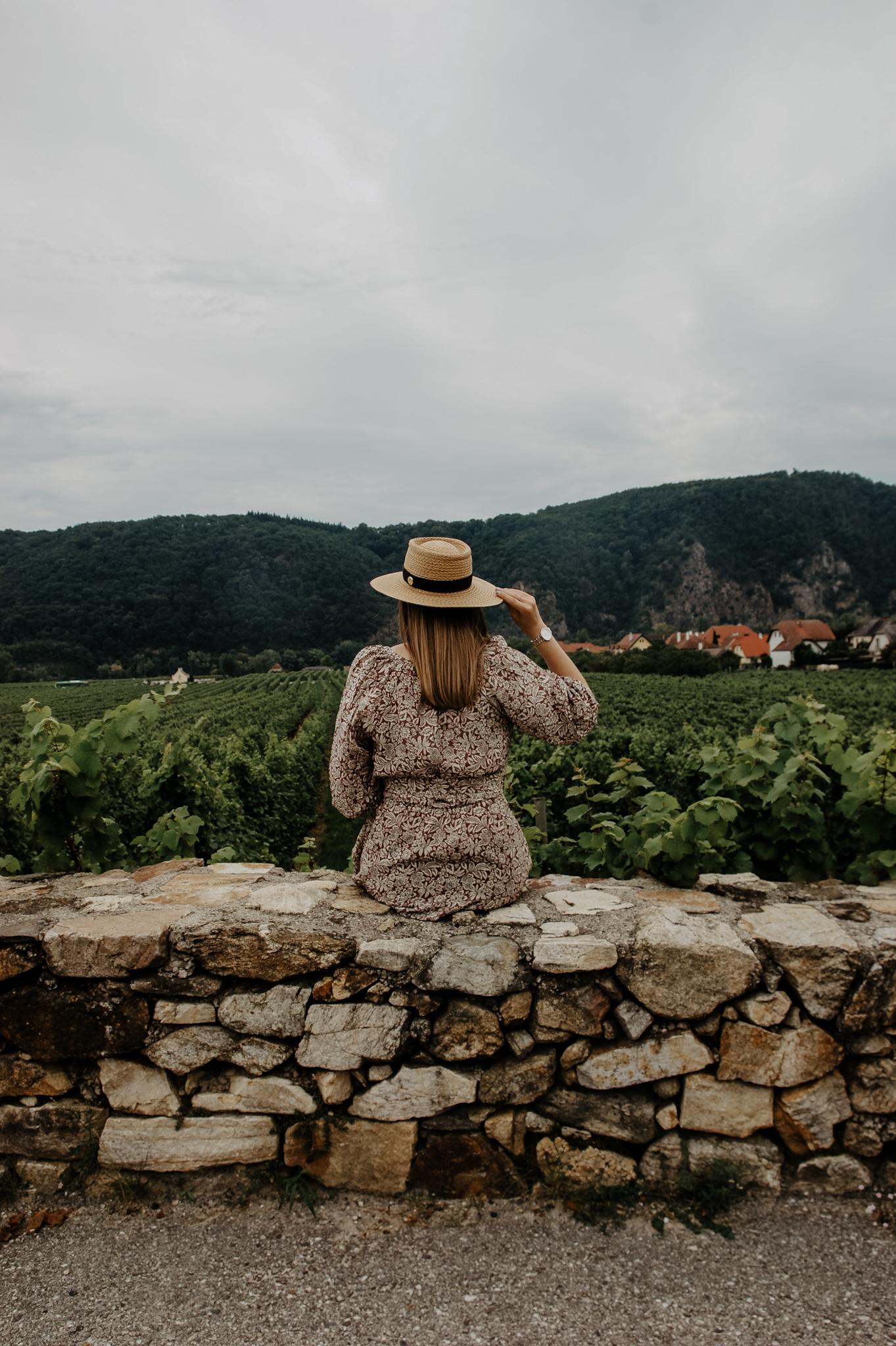 Herbstkleid, Wachau, Loiben, Ausflug, Weingärten