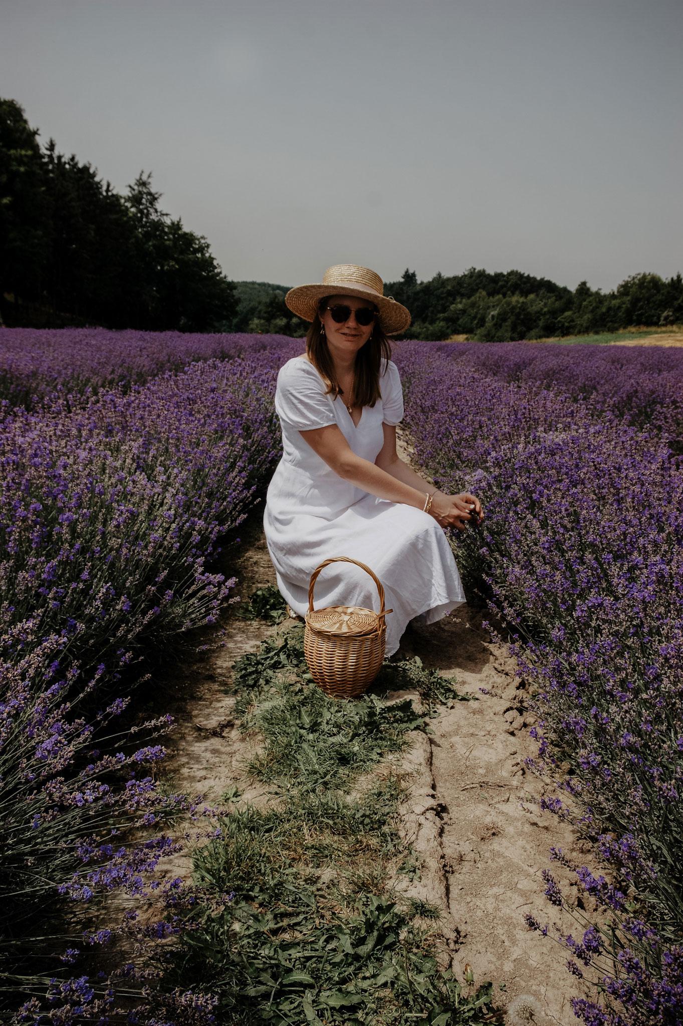 Lavendelfeld, Lavendel